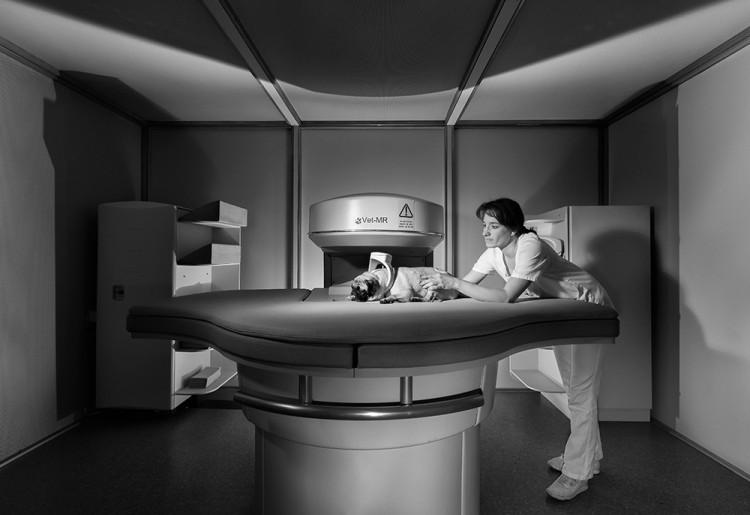 In einer Tierklinik bei Hamburg wird ein Haushund im MRT untersucht