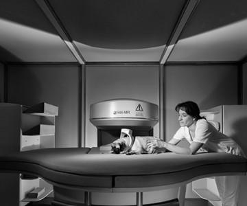 Fotoshooting in einer Tierklinik